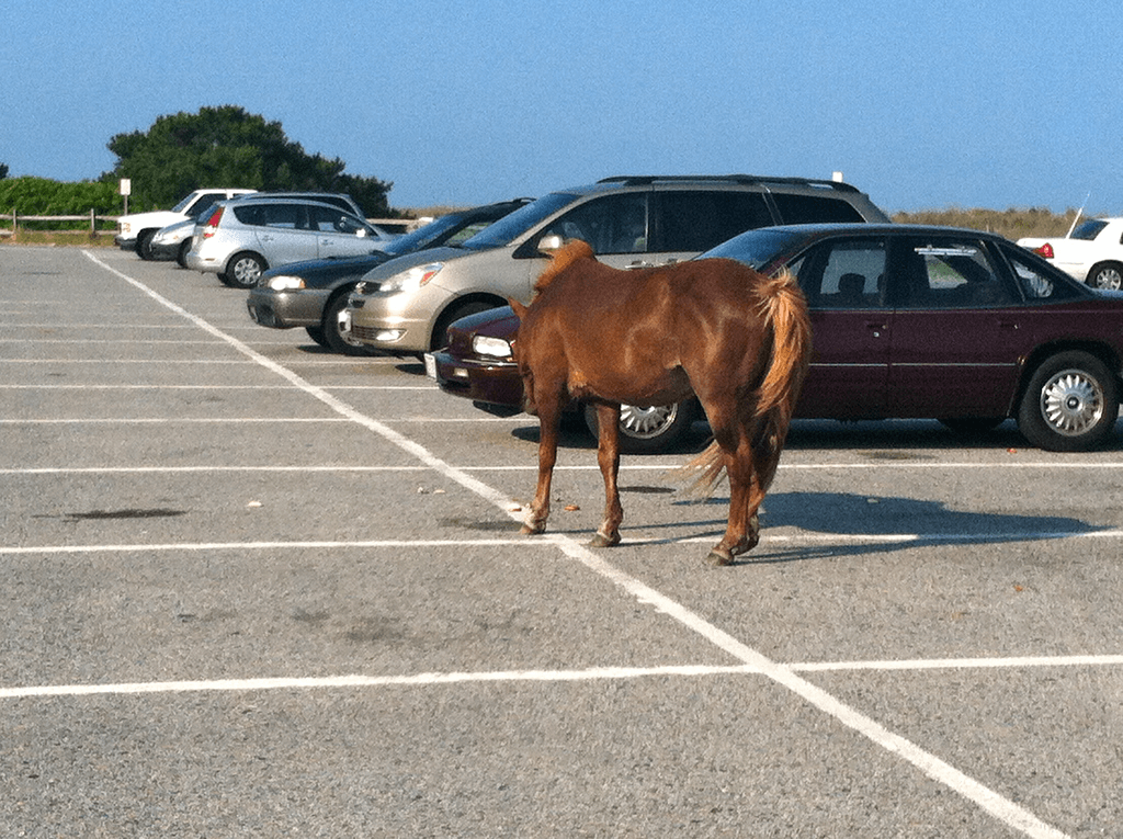 Parking at Assateague Island