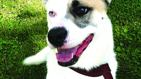 Variety of activities on tap during first Pooch Palooza