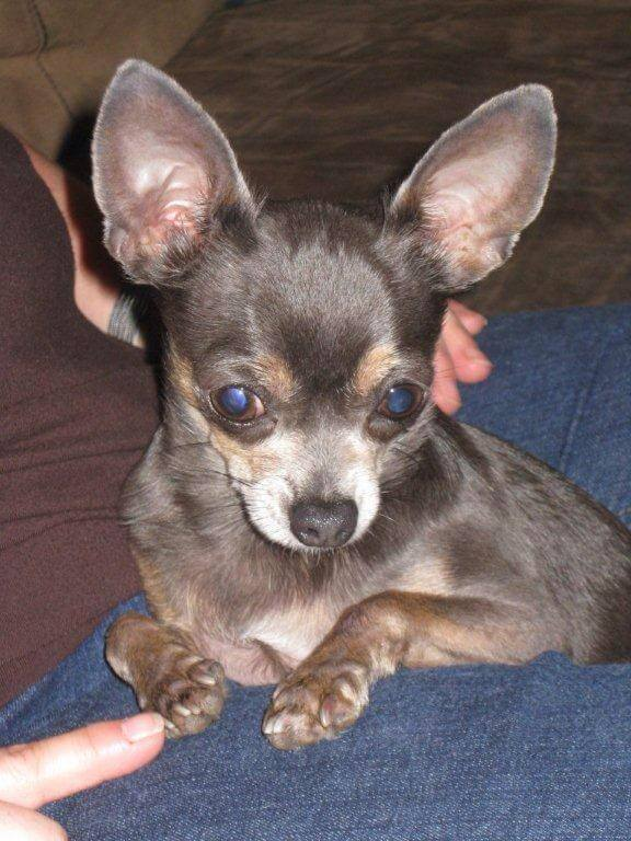 Search continues for Muller family pet