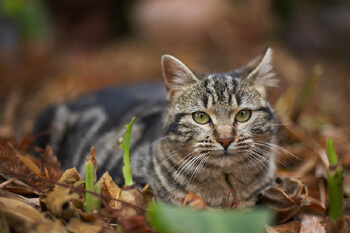 Volunteers work to control OC's, area's feral cats