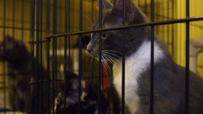 Humane Society working through financial issues