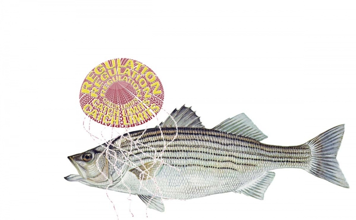 New regional rockfish regulations carry a sting