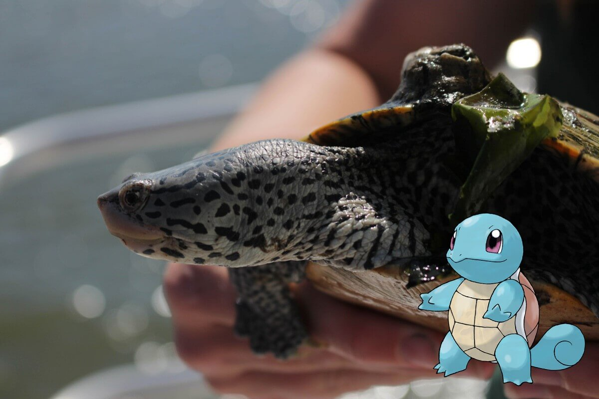 Terrapin with the Pokémon Squirtle