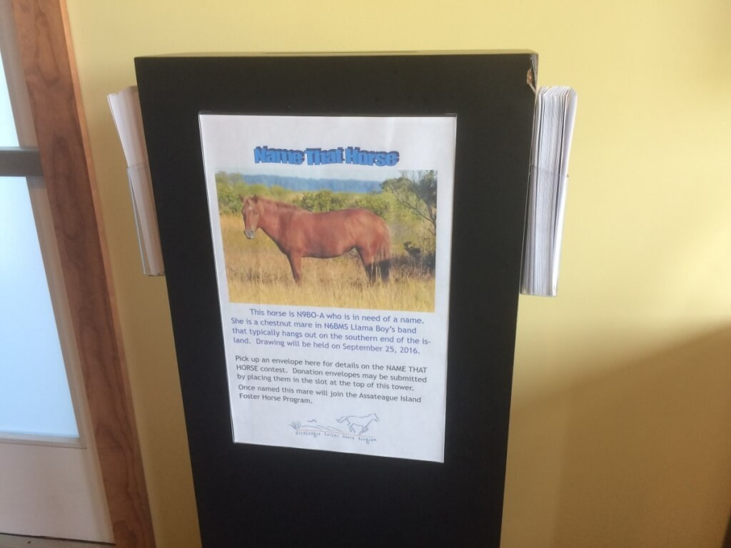 The horse-naming lottery allows people to make donations for the opportunity to name the new horses.