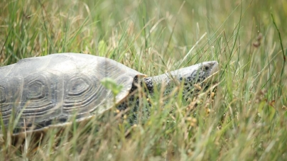 Creature Feature: Protecting our turtles
