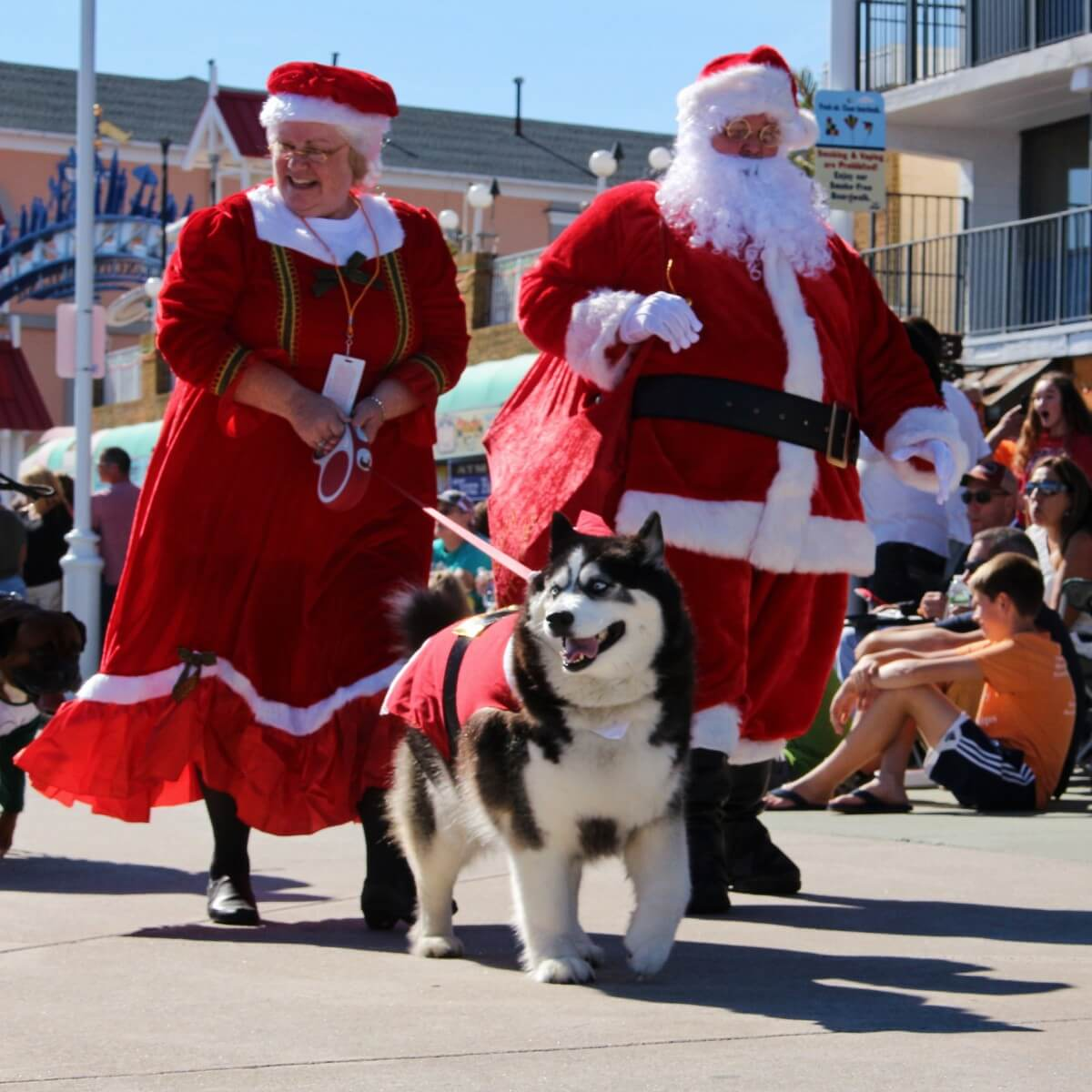 Santa and a husky