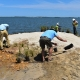 Resiliency project keeps Assateague's shoreline protected