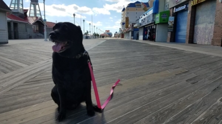 Dog-Friendly Hotels, Restaurants, and Other Places to Go in Ocean City