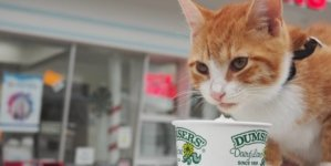 Pip the Beach Cat to write a children's book about his Ocean City adventures