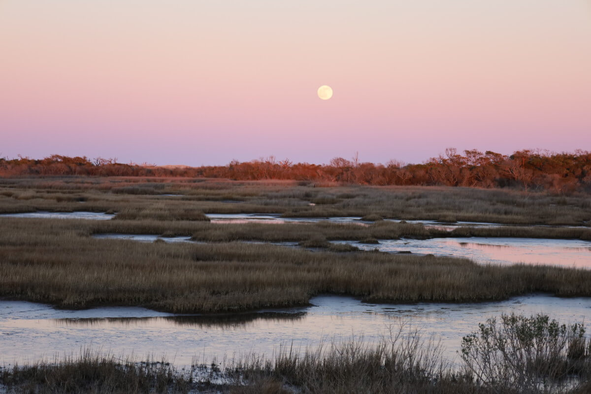 Moonrise over Assateague's marshes